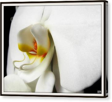 Canvas Print featuring the photograph Touch Of Yellow by Heidi Manly