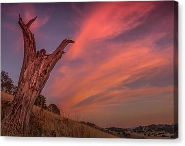 Touch The Sky Canvas Print by Marc Crumpler