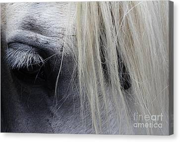 Touched My Heart Canvas Print by Fiona Kennard