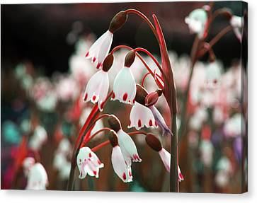 Canvas Print featuring the photograph Touches Of Red by Rafael Quirindongo