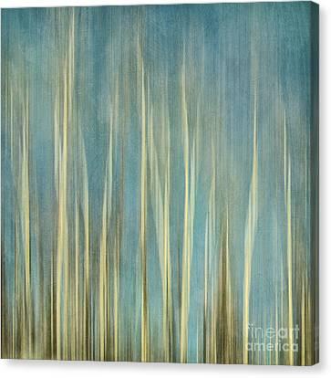 Tree Bark Canvas Print - Touching The Sky by Priska Wettstein