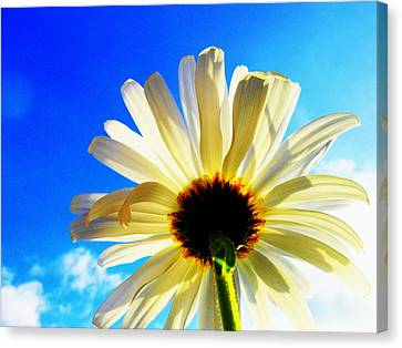 Canvas Print featuring the photograph Touching Your Dream by Karen Horn