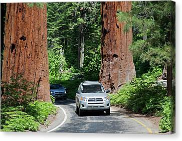 Tourism In Sequoia National Park Canvas Print by Jim West