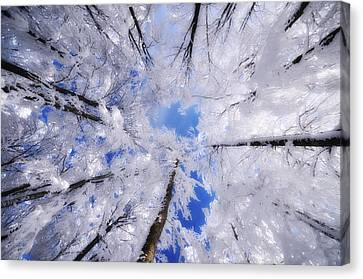 Canvas Print featuring the photograph Tourniquet by Philippe Sainte-Laudy