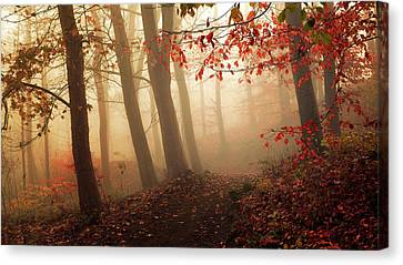 Towards The Light. Canvas Print by Leif L?ndal