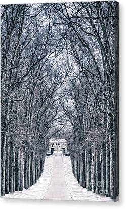 Towards The Lonely Path Of Winter Canvas Print by Evelina Kremsdorf