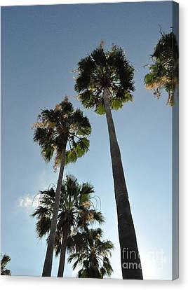 Canvas Print featuring the photograph Towering Palms by John Black