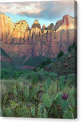 Zion National Park Canvas Print - Towers Of The Virgin, Zion National by Tim Fitzharris