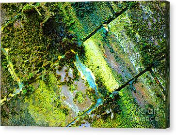 Canvas Print featuring the photograph Toxic Moss by Christiane Hellner-OBrien