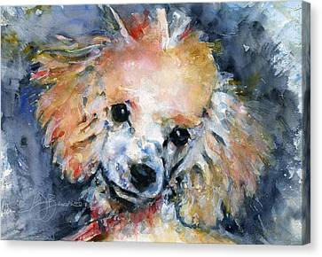 Toy Poodle Canvas Print