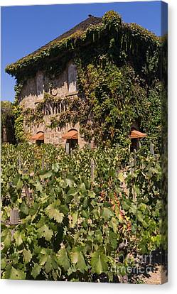 Napa Valley And Vineyards Canvas Print - Tra Vigne Restaurant In St Helena Napa California Dsc1685 Vertical by Wingsdomain Art and Photography
