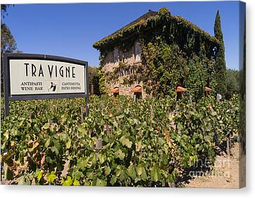 Napa Valley And Vineyards Canvas Print - Tra Vigne Restaurant In St Helena Napa California Dsc1685 by Wingsdomain Art and Photography