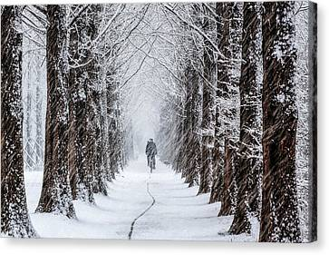 Trace Canvas Print