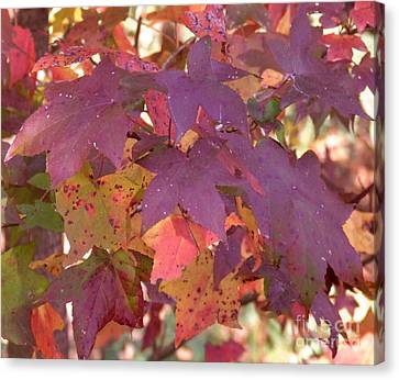 Canvas Print featuring the photograph Traces Of Fall by Andrea Anderegg