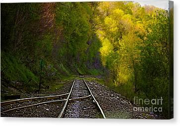 Track Through The Hillside  Canvas Print by Peggy Franz