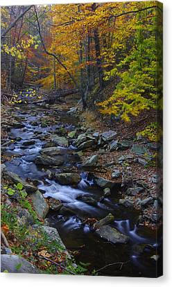 Tracking Color - Big Hunting Creek Catoctin Mountain Park Maryland Autumn Afternoon Canvas Print