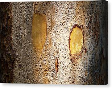 Tracks Left By Bark Beetles Canvas Print by Ashley Cooper