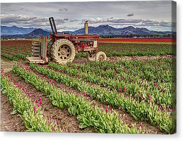 Tractor And Tulips Canvas Print
