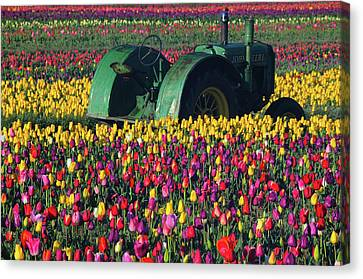Tractor In The Tulip Field, Tulip Canvas Print by Michel Hersen