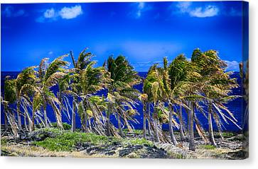 Trade Winds Canvas Print by Stephen Stookey