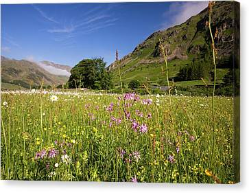 Traditional Hay Meadows Canvas Print by Ashley Cooper