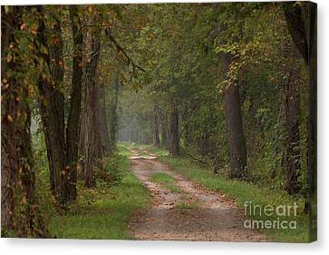 Trail Along The Canal Canvas Print