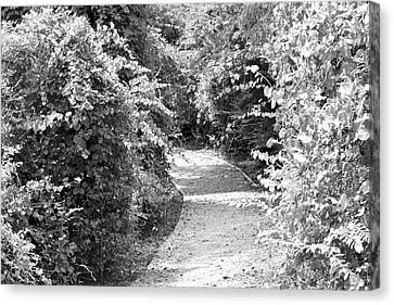 Trail In Black And White Canvas Print by Carolyn Ricks