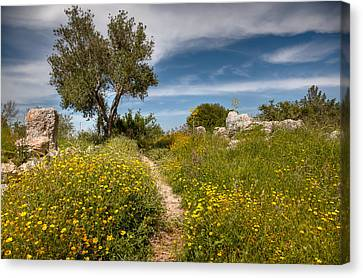 Canvas Print featuring the photograph Trail Of Spring by Uri Baruch