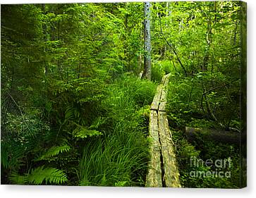 Trail Through The Woods Canvas Print by Diane Diederich