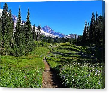 Trail To Mazama Ridge Canvas Print