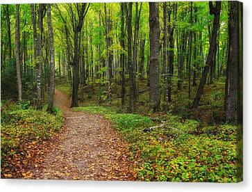 Trail To Miners Falls Canvas Print