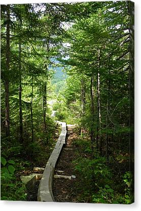 Trail To Sandy Stream Pond Canvas Print
