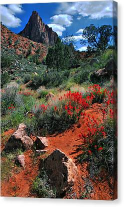 Canvas Print featuring the photograph Trail To The Watchman by Barbara Manis