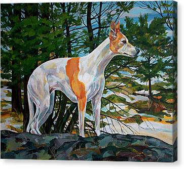 Sight Hound Canvas Print - Trailblazer by Derrick Higgins