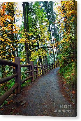 Trails In The Forrest Canvas Print by Tina Wentworth