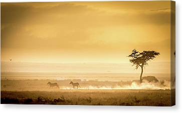 Training, Because The Lions Await. Canvas Print