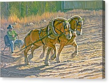 Training For The Pull  Canvas Print by Paul Krapf