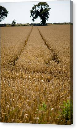 Tramlines Canvas Print by Paul Lilley