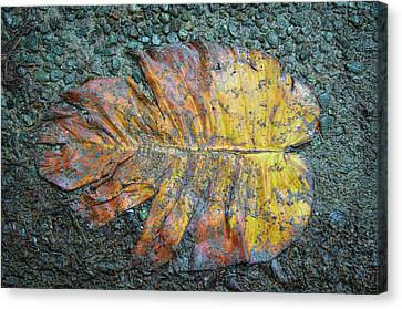Canvas Print featuring the photograph Trampled Leaf by Britt Runyon