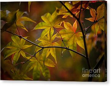 Tranquil Collage Canvas Print by Mike Reid