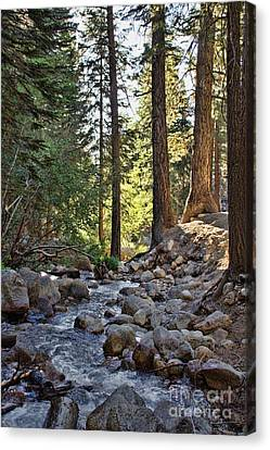 Tranquil Forest Canvas Print by Peggy Hughes