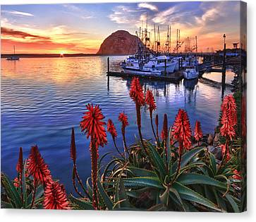 Tranquil Harbor Canvas Print by Beth Sargent