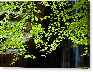 Canvas Print featuring the  Tranquil by Haren Images- Kriss Haren
