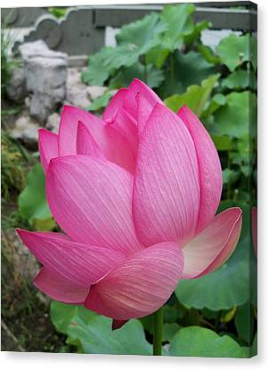 Tranquil Lotus  Canvas Print