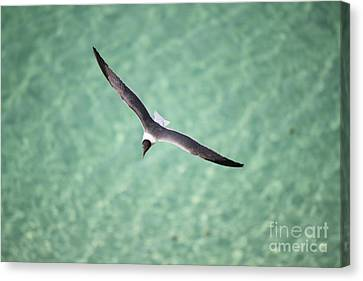Tranquil Soaring Canvas Print