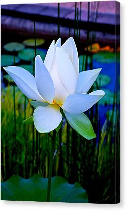 Tranquil Water Lily - Water Garden Lotus Canvas Print