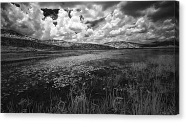 Canvas Print featuring the photograph Tranquil by Yvonne Emerson AKA RavenSoul