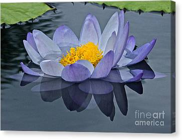 Tranquility Canvas Print by Byron Varvarigos