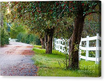 Tranquility... Canvas Print by Grant Grindle