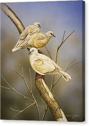 Tranquillity - Ring-necked Doves Canvas Print by Frances McMahon